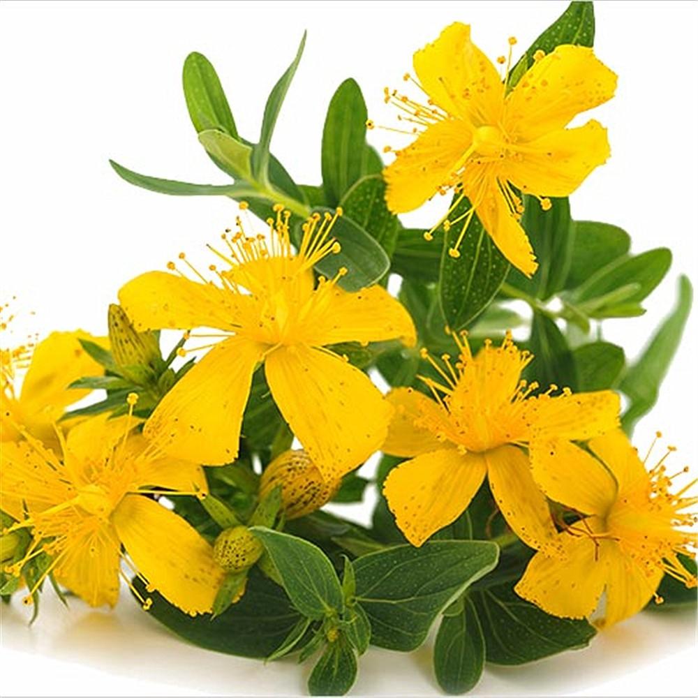 Sarı Kantaron Yağı