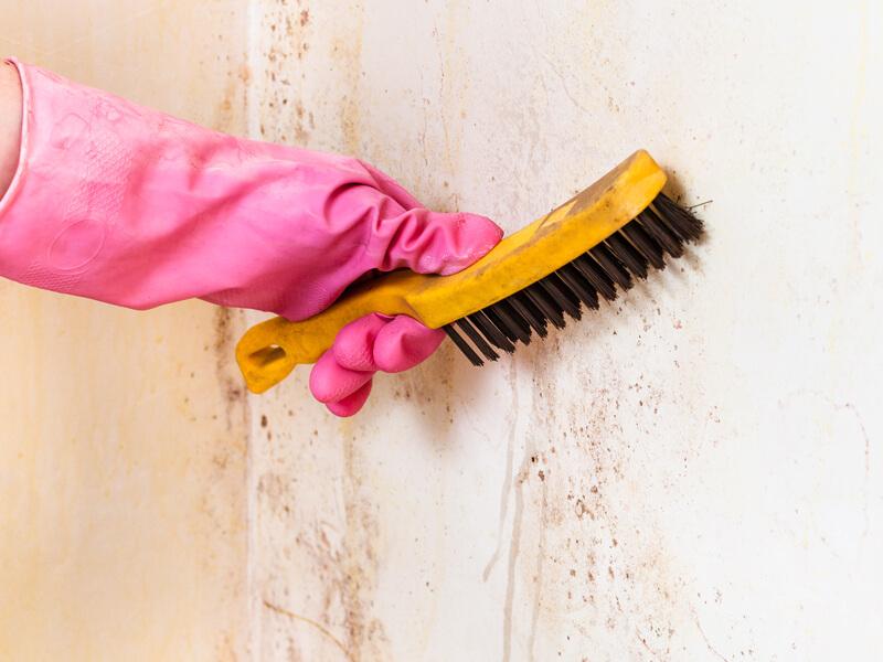 Duvardaki Küfü Temizlemek İçin Ne Yapılmalı?