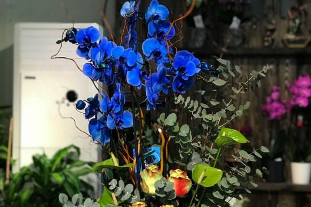 Orkide çiçeği nedir? Orkide çiçeğinin bakımı nasıl yapılmalıdır?