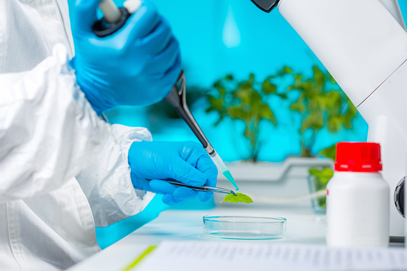Bitkisel Frengi Tedavisi ve Frengiye İyi Gelen Bitkiler