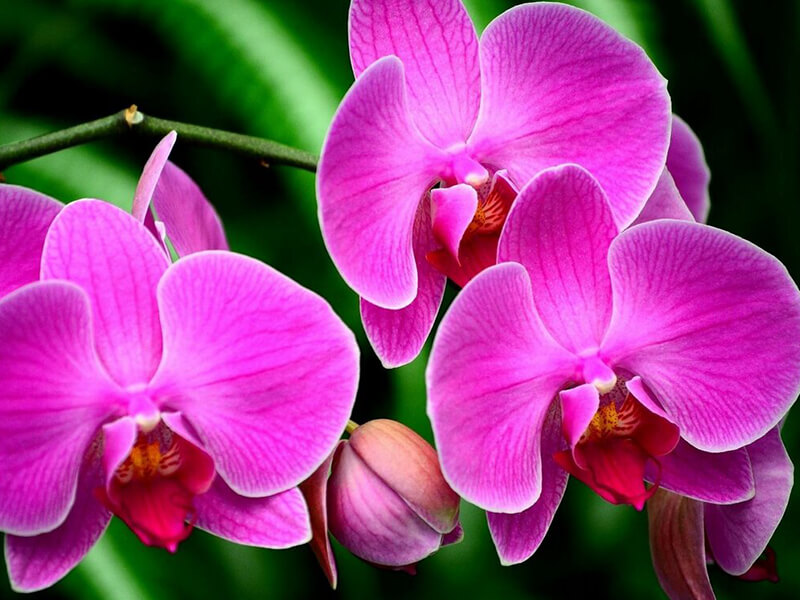 Orkide Çiçeği Tohumu