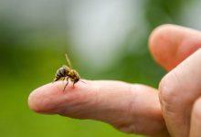 Arı Sokmalarında İlkyardım Nasıl Olmalıdır?