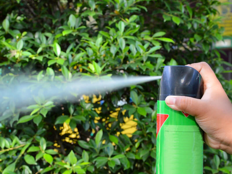 Çimlerdeki sivrisinekleri öldürün