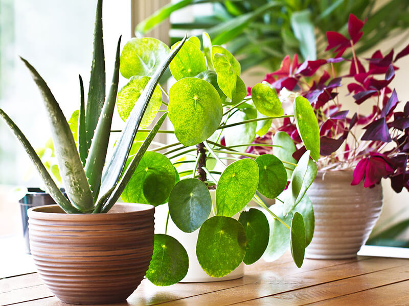 Tatildeyken bitkilerinizi canlı tutun